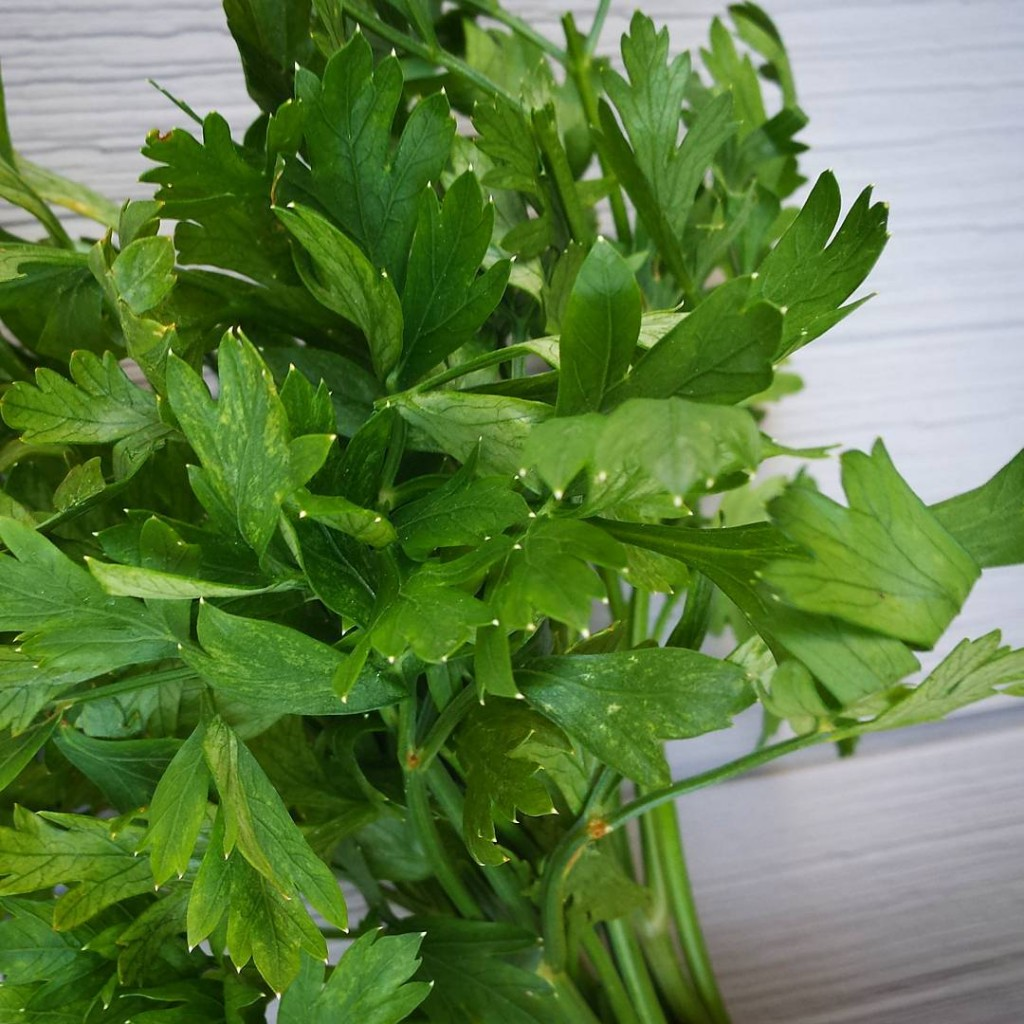Parsley is one of my favourite herbs and I feelhellip