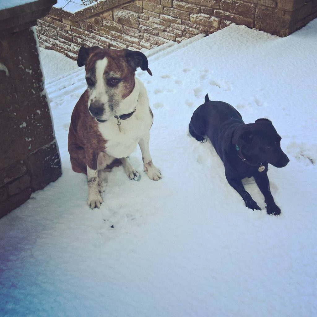 Waiting patiently for their walk in the snow today