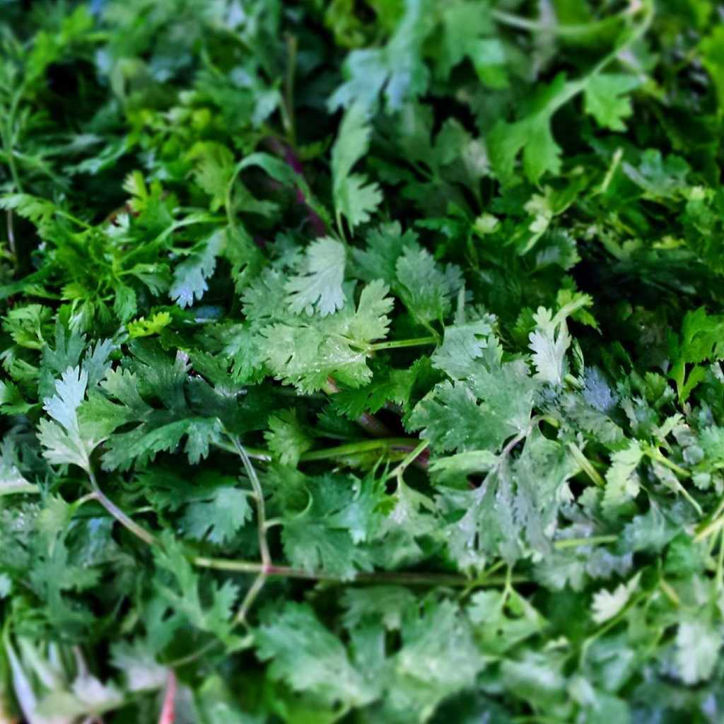 Coriander is high in antioxidants which we all know arehellip