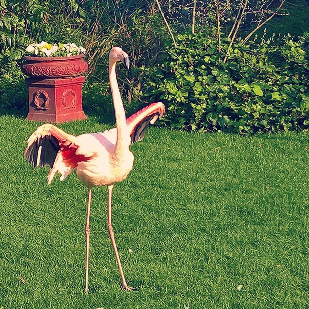 Flamingos at the Roof Garden Kensington LondonBeautifully looked after andhellip